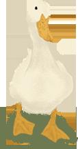 Quackie the Pekin Duck